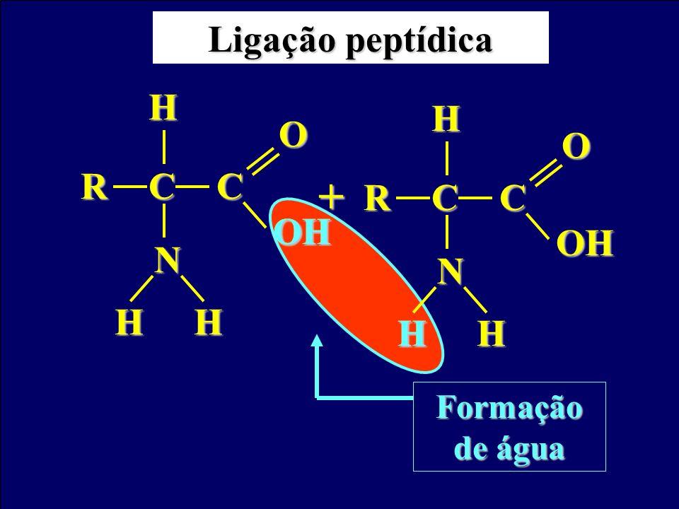 Ligação peptídica C R N H OH O C R N H OH O + OH H Formação de água