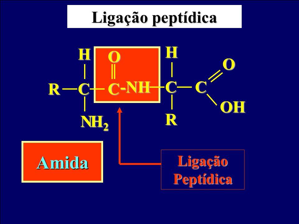Ligação peptídica C R N H H2 O -NH OH Ligação Peptídica Amida
