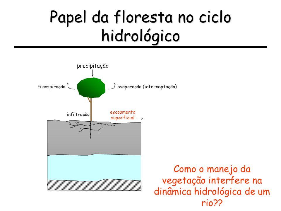 Papel da floresta no ciclo hidrológico