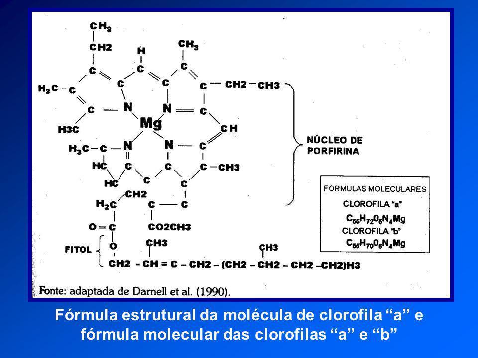 Fórmula estrutural da molécula de clorofila a e fórmula molecular das clorofilas a e b