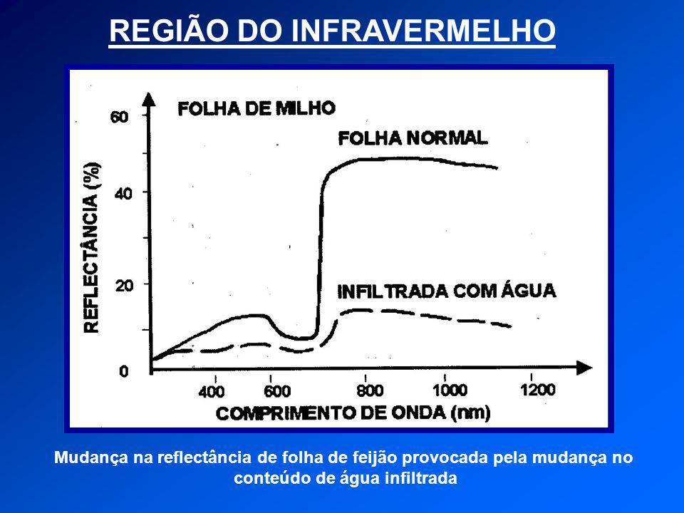 REGIÃO DO INFRAVERMELHO