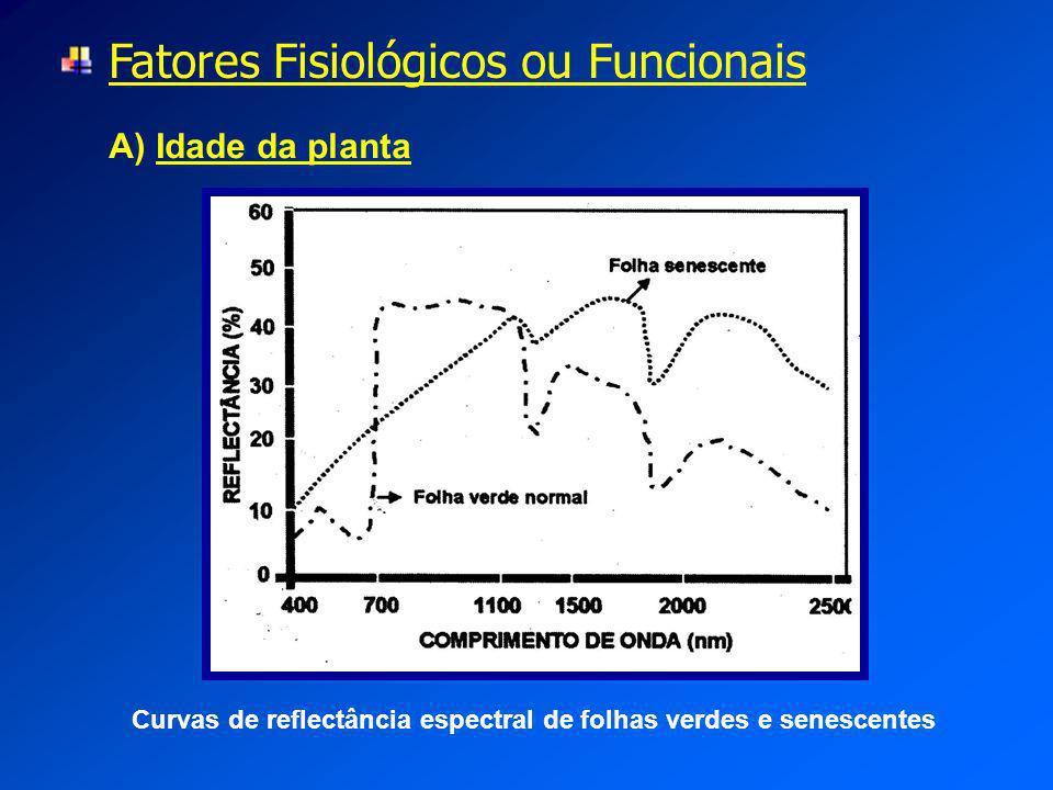Fatores Fisiológicos ou Funcionais