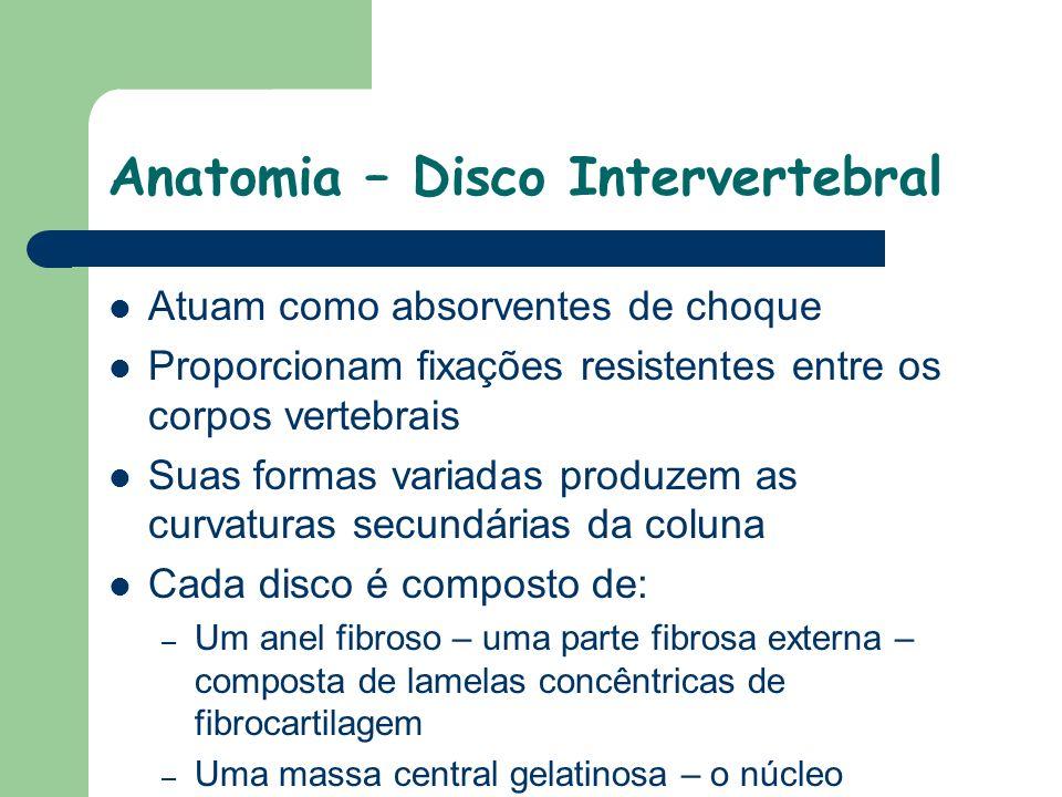 Anatomia – Disco Intervertebral
