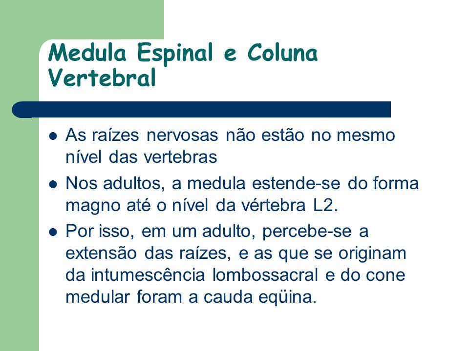 Medula Espinal e Coluna Vertebral