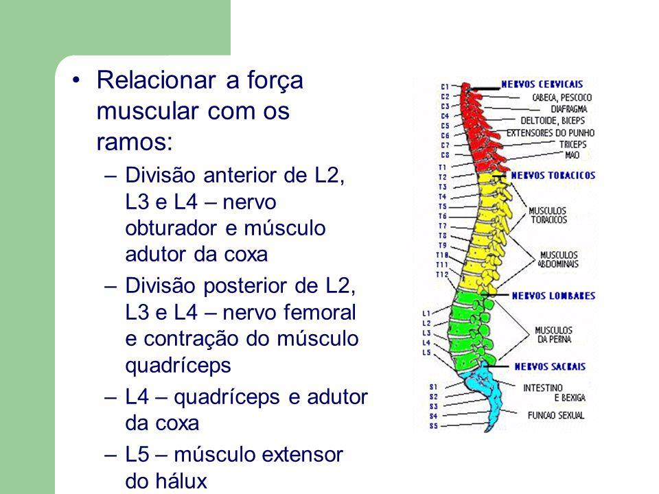 Relacionar a força muscular com os ramos: