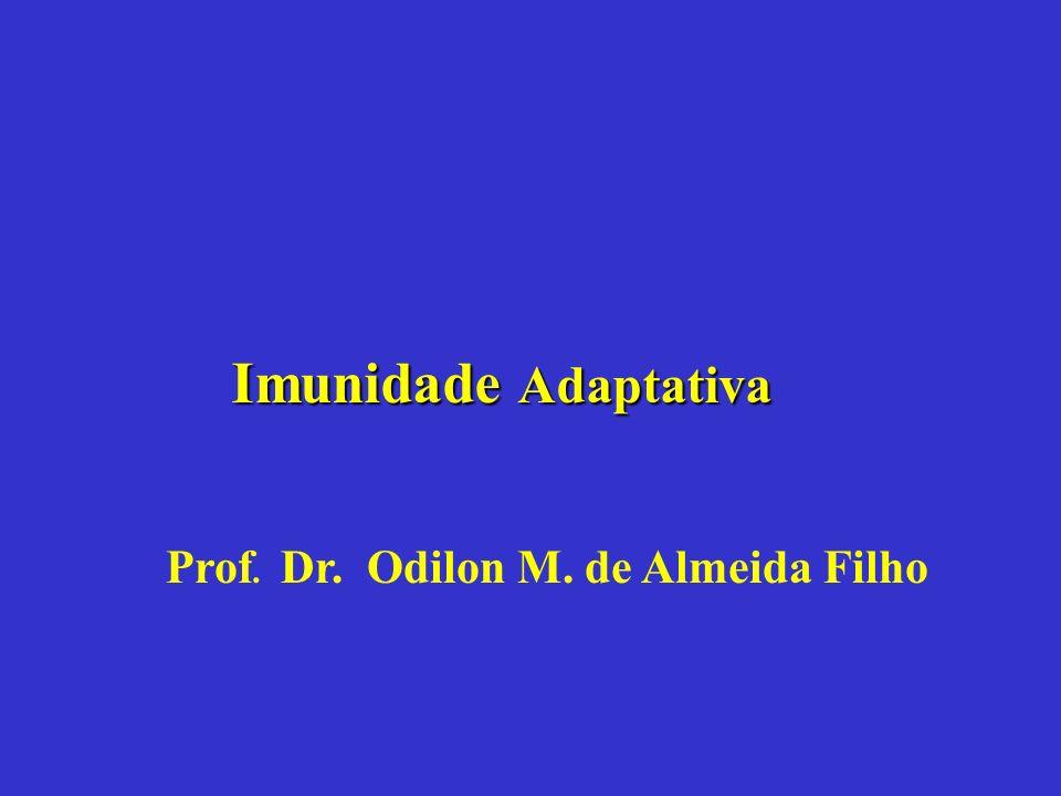 Prof. Dr. Odilon M. de Almeida Filho