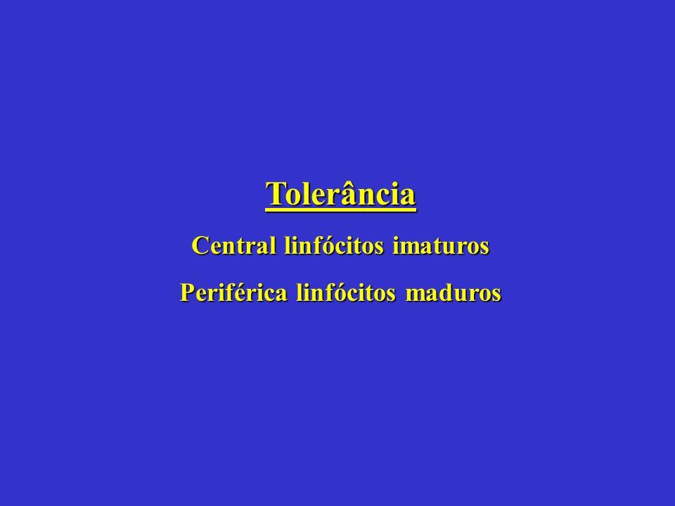 Central linfócitos imaturos Periférica linfócitos maduros