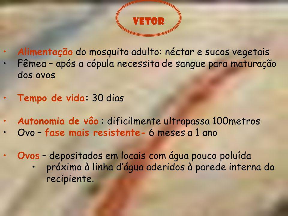 Vetor Alimentação do mosquito adulto: néctar e sucos vegetais. Fêmea – após a cópula necessita de sangue para maturação dos ovos.