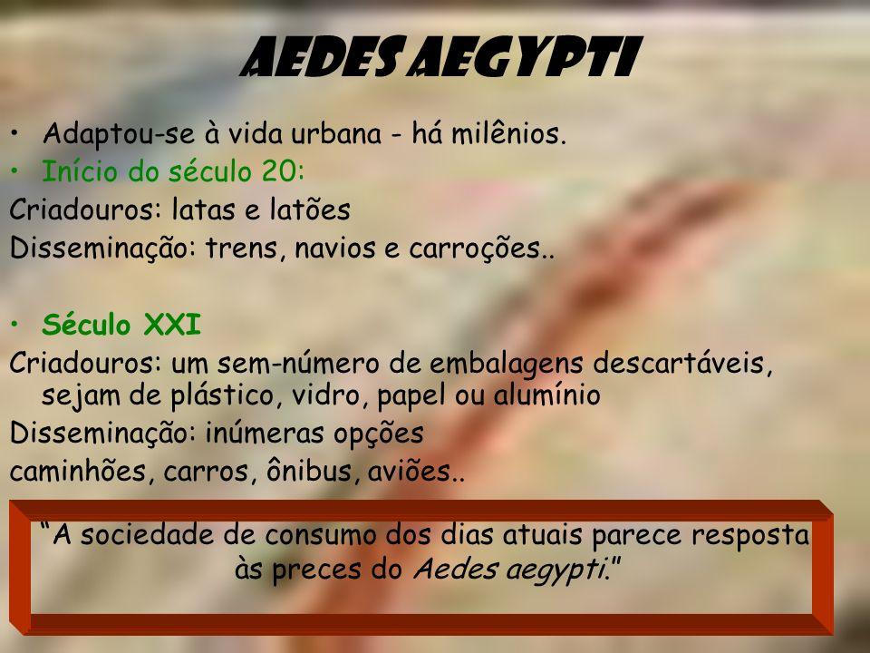 Aedes aegypti Adaptou-se à vida urbana - há milênios.
