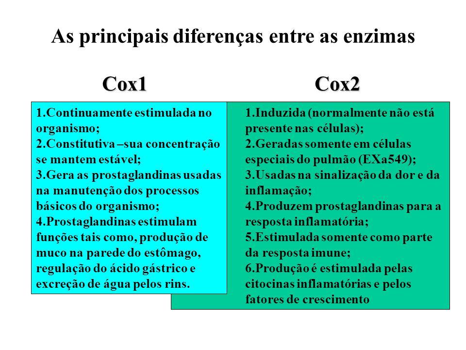 As principais diferenças entre as enzimas
