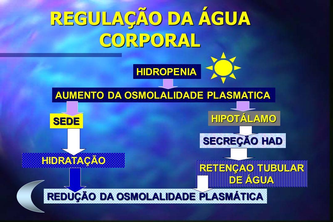 REGULAÇÃO DA ÁGUA CORPORAL