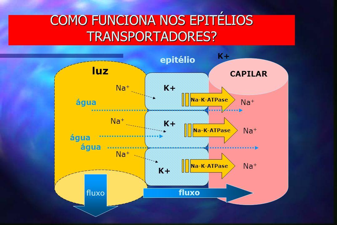 COMO FUNCIONA NOS EPITÉLIOS TRANSPORTADORES