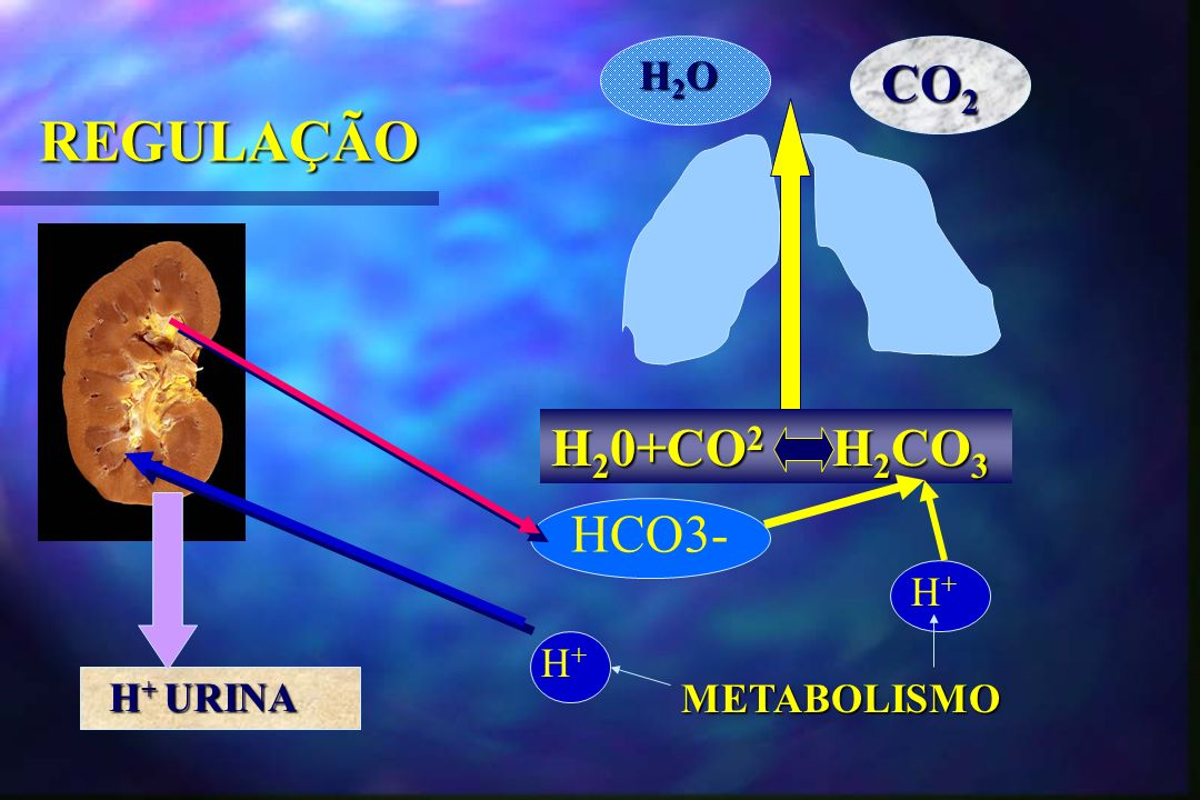 H2O CO2 REGULAÇÃO H20+CO2 H2CO3 HCO3- H+ H+ H+ URINA METABOLISMO