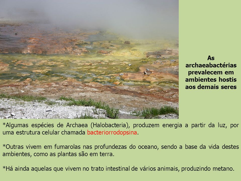 As archaeabactérias prevalecem em ambientes hostis aos demais seres