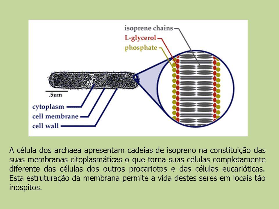 A célula dos archaea apresentam cadeias de isopreno na constituição das suas membranas citoplasmáticas o que torna suas células completamente diferente das células dos outros procariotos e das células eucarióticas.