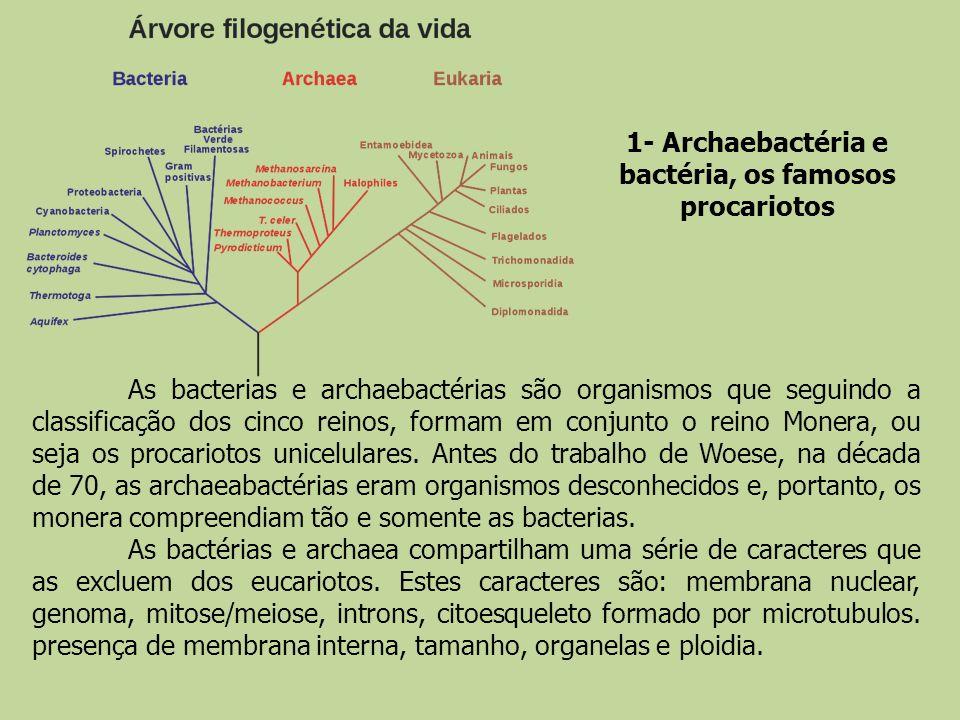 1- Archaebactéria e bactéria, os famosos procariotos