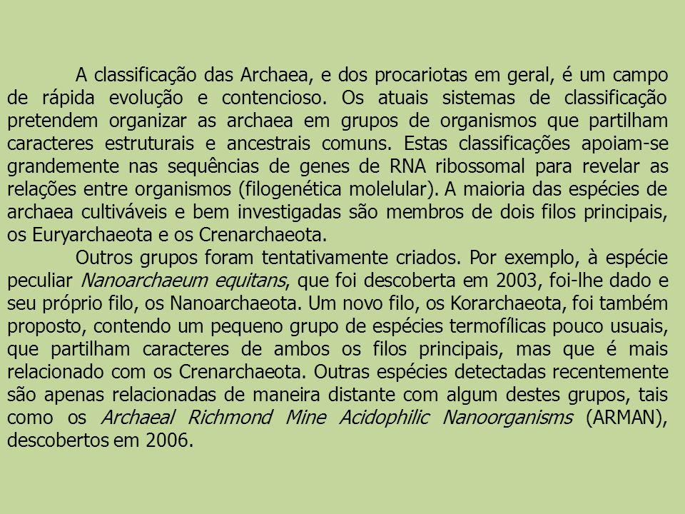A classificação das Archaea, e dos procariotas em geral, é um campo de rápida evolução e contencioso. Os atuais sistemas de classificação pretendem organizar as archaea em grupos de organismos que partilham caracteres estruturais e ancestrais comuns. Estas classificações apoiam-se grandemente nas sequências de genes de RNA ribossomal para revelar as relações entre organismos (filogenética molelular). A maioria das espécies de archaea cultiváveis e bem investigadas são membros de dois filos principais, os Euryarchaeota e os Crenarchaeota.