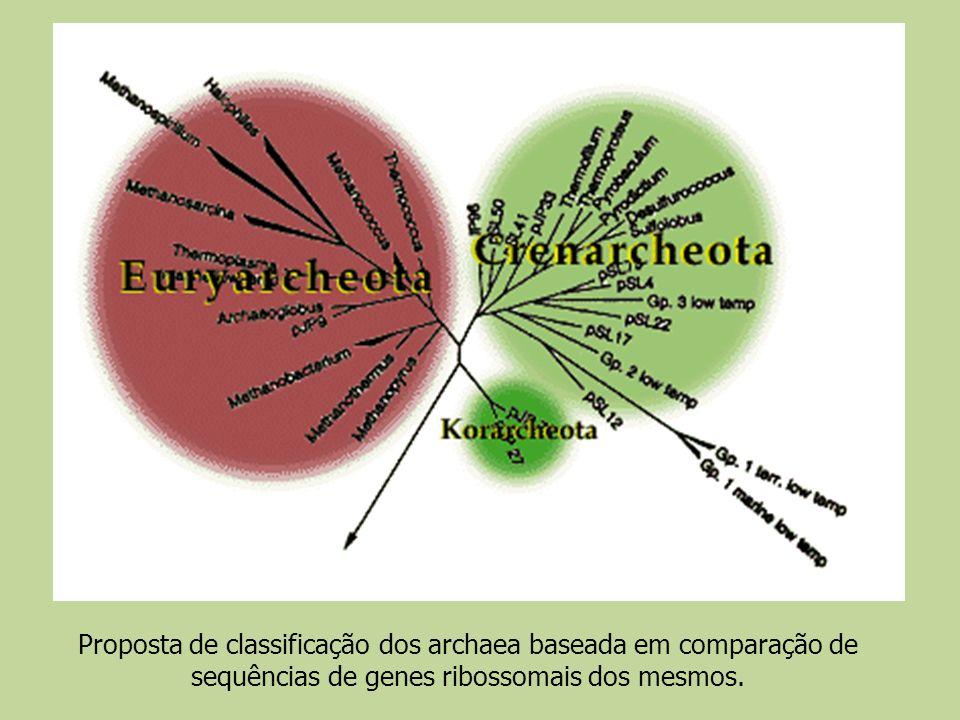 Proposta de classificação dos archaea baseada em comparação de sequências de genes ribossomais dos mesmos.