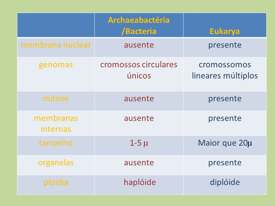 Archaeabactéria /Bacteria Eukarya
