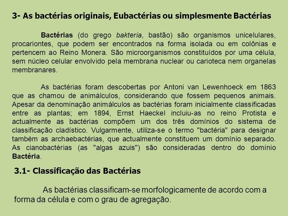 3- As bactérias originais, Eubactérias ou simplesmente Bactérias