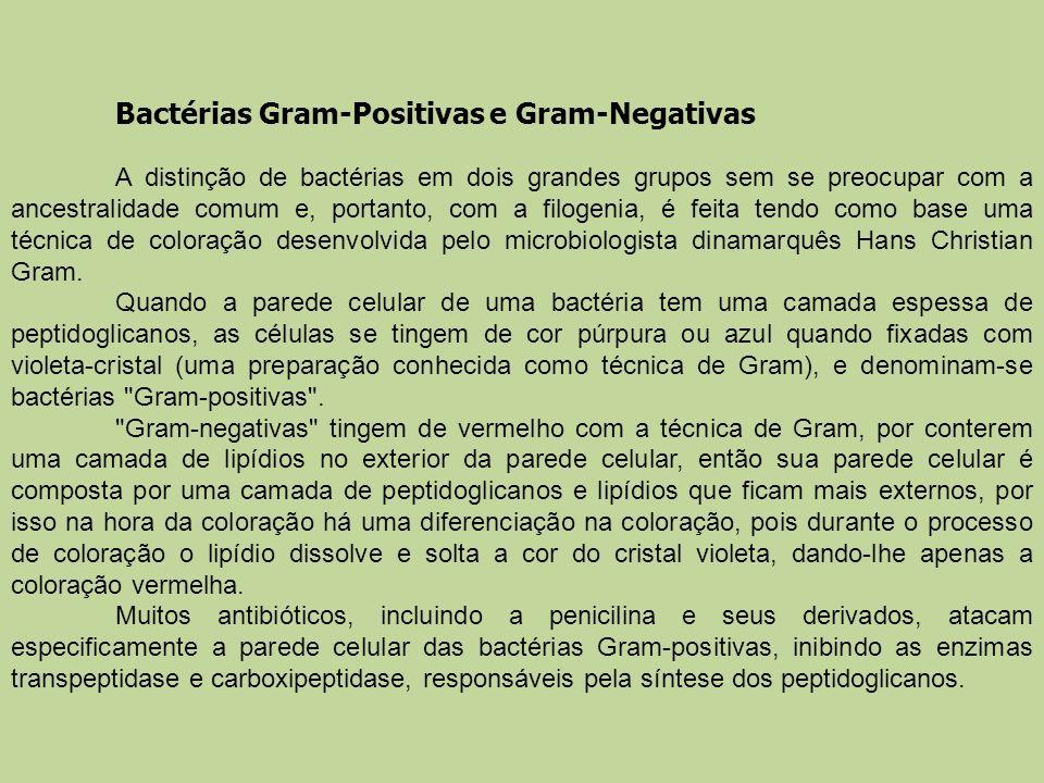 Bactérias Gram-Positivas e Gram-Negativas