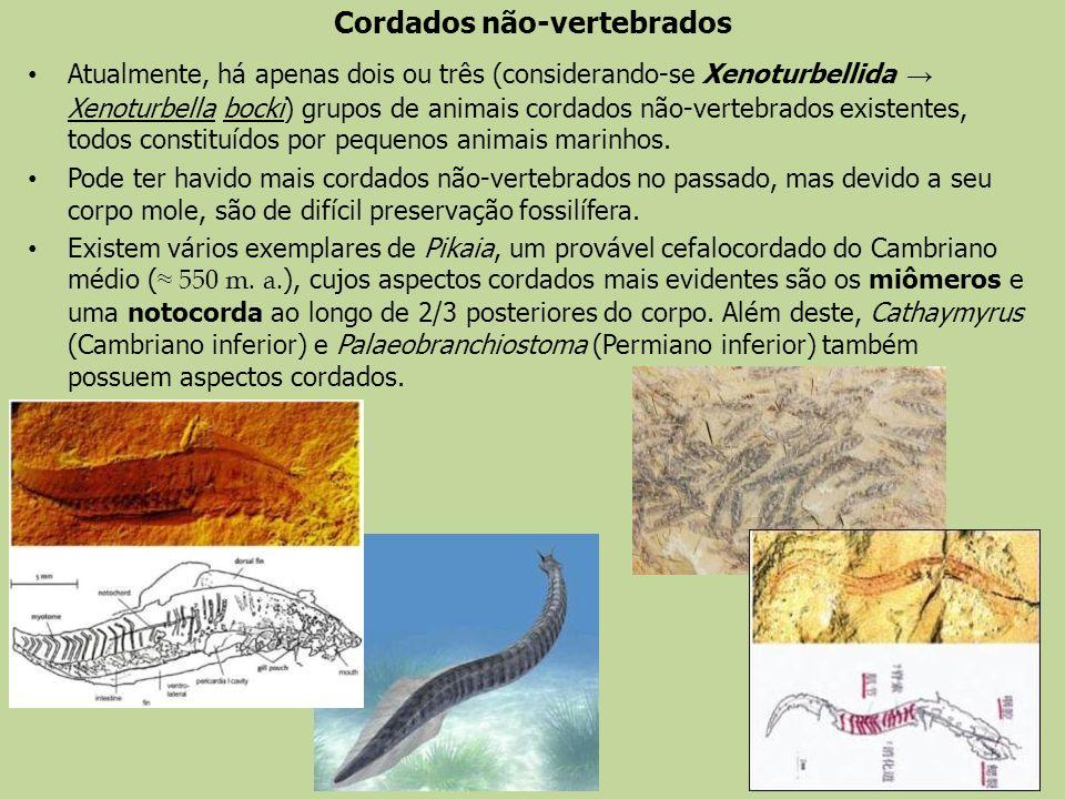 Cordados não-vertebrados