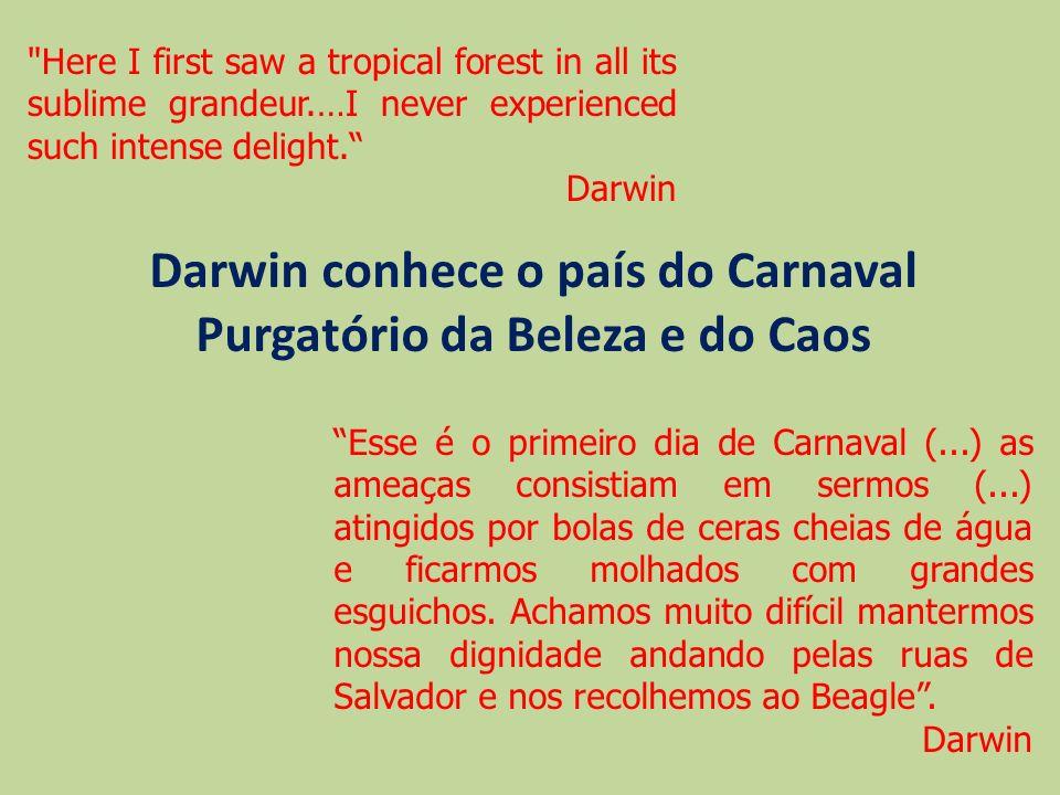 Darwin conhece o país do Carnaval Purgatório da Beleza e do Caos