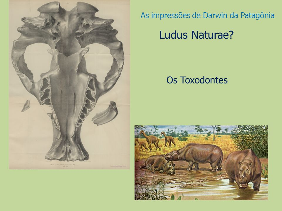 As impressões de Darwin da Patagônia