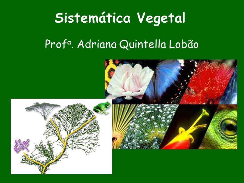 Profa. Adriana Quintella Lobão