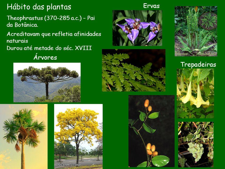 Hábito das plantas Ervas Árvores Trepadeiras