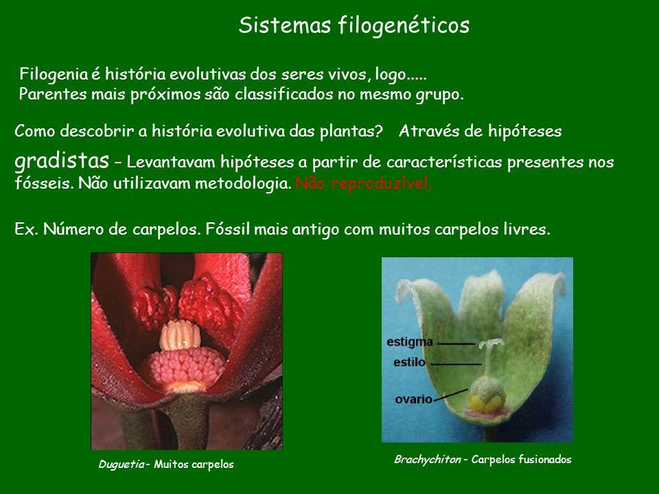 Sistemas filogenéticos