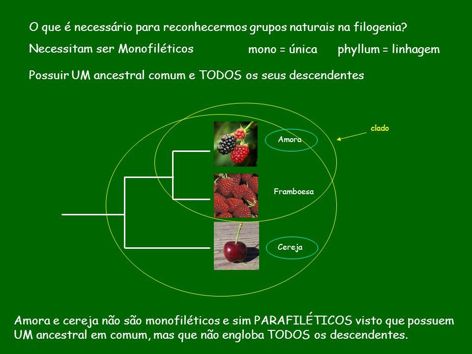 O que é necessário para reconhecermos grupos naturais na filogenia