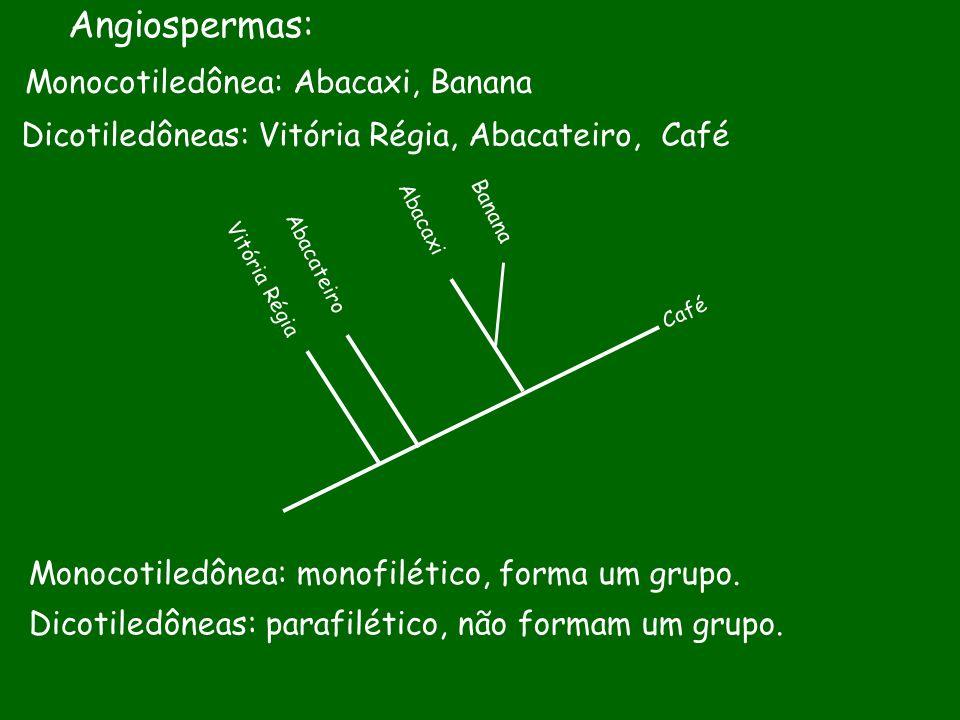 Angiospermas: Monocotiledônea: Abacaxi, Banana