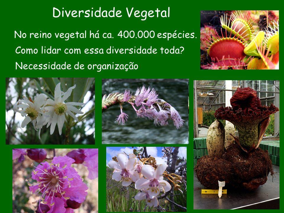 Diversidade Vegetal No reino vegetal há ca. 400.000 espécies.