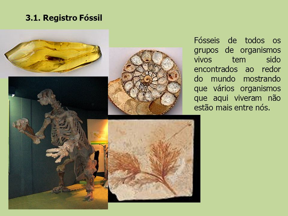 3.1. Registro Fóssil