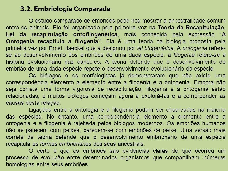 3.2. Embriologia Comparada