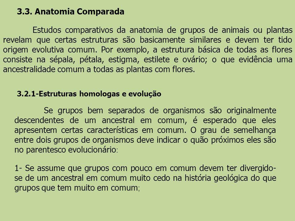 3.3. Anatomia Comparada