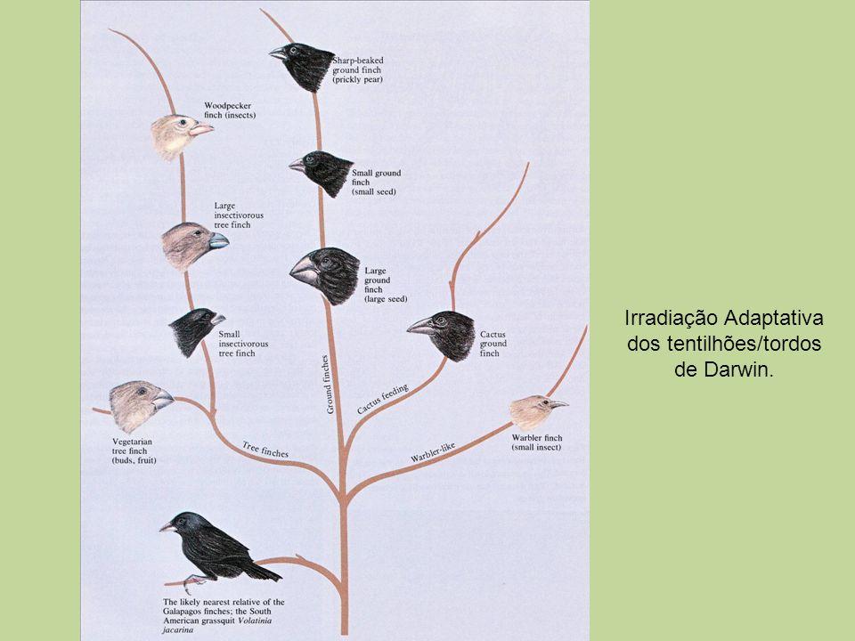 Irradiação Adaptativa dos tentilhões/tordos de Darwin.