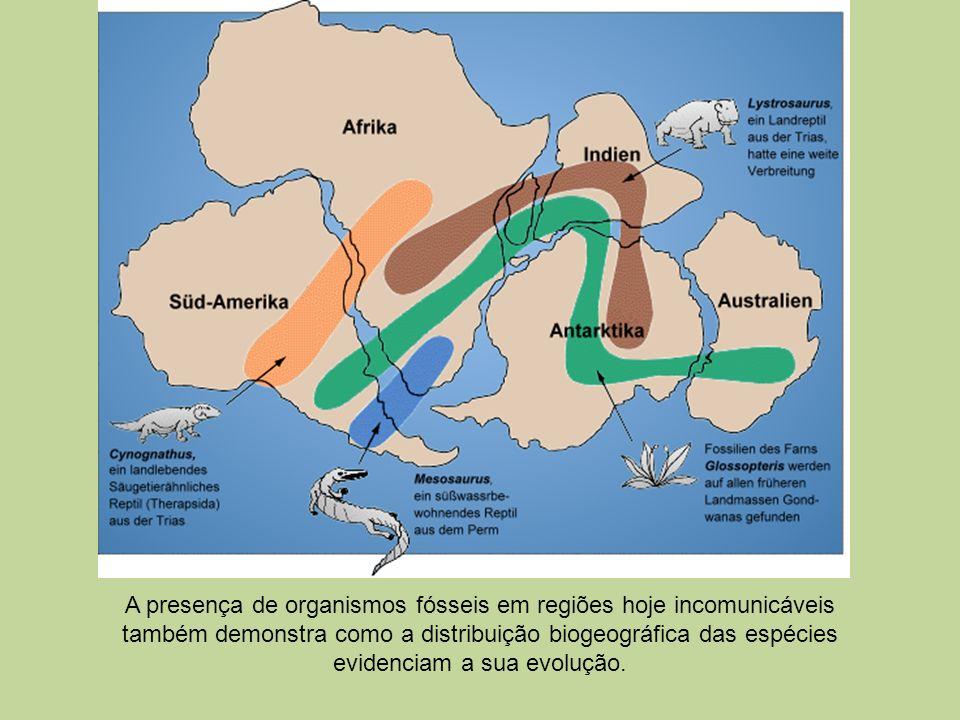 A presença de organismos fósseis em regiões hoje incomunicáveis também demonstra como a distribuição biogeográfica das espécies evidenciam a sua evolução.