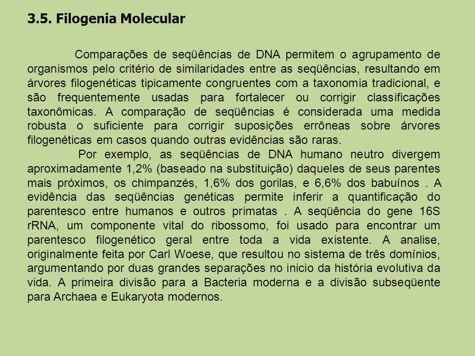 3.5. Filogenia Molecular