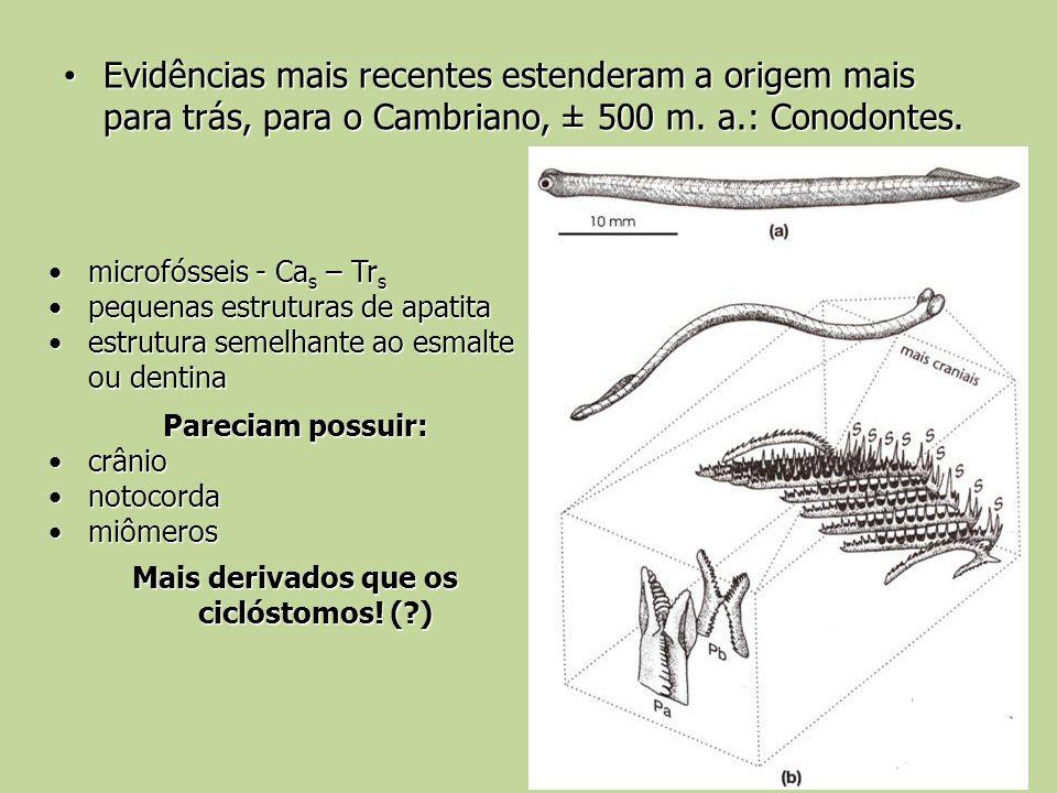 Mais derivados que os ciclóstomos! ( )
