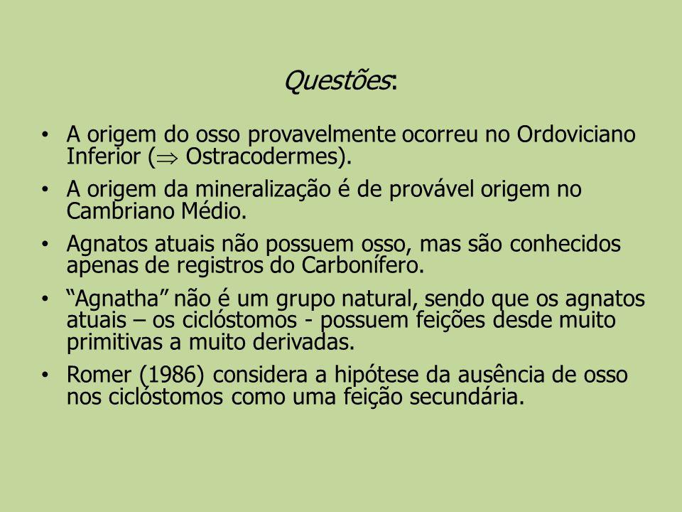 Questões: A origem do osso provavelmente ocorreu no Ordoviciano Inferior ( Ostracodermes).