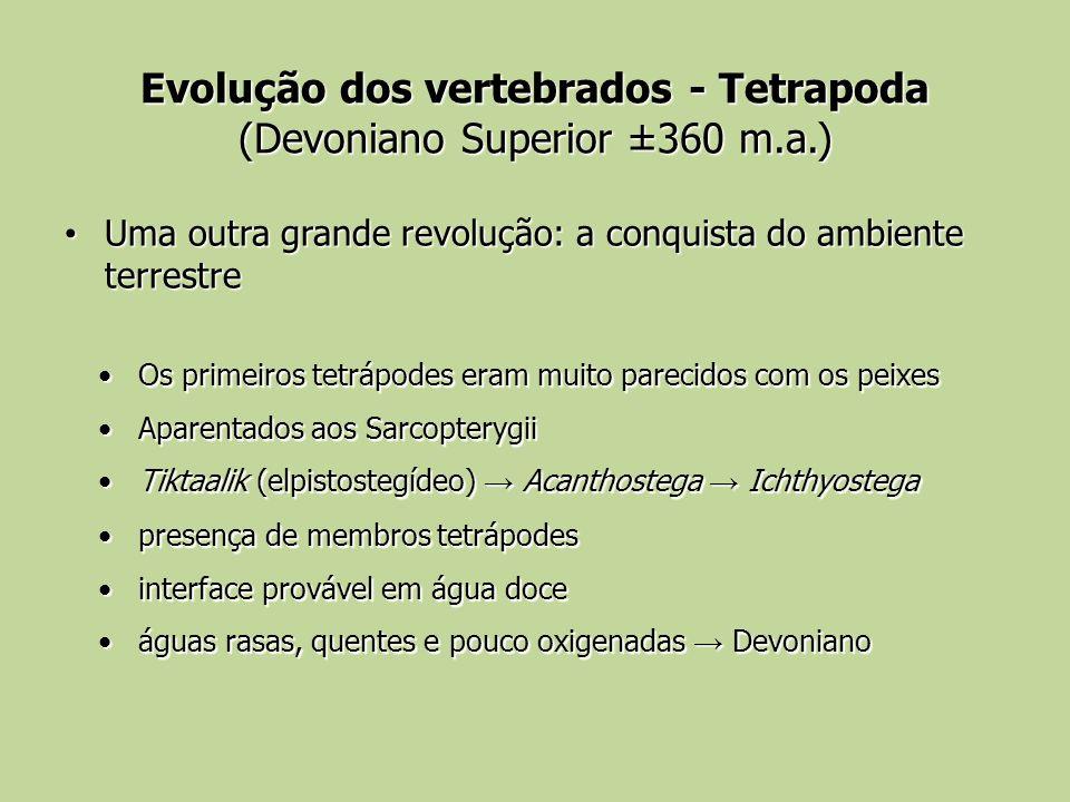 Evolução dos vertebrados - Tetrapoda (Devoniano Superior ±360 m.a.)