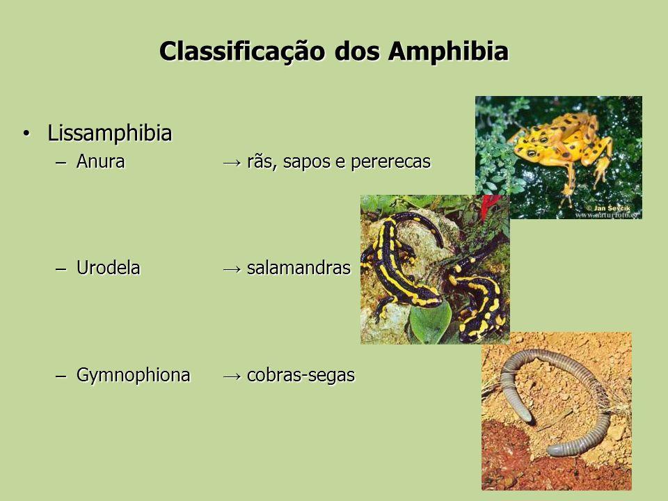 Classificação dos Amphibia