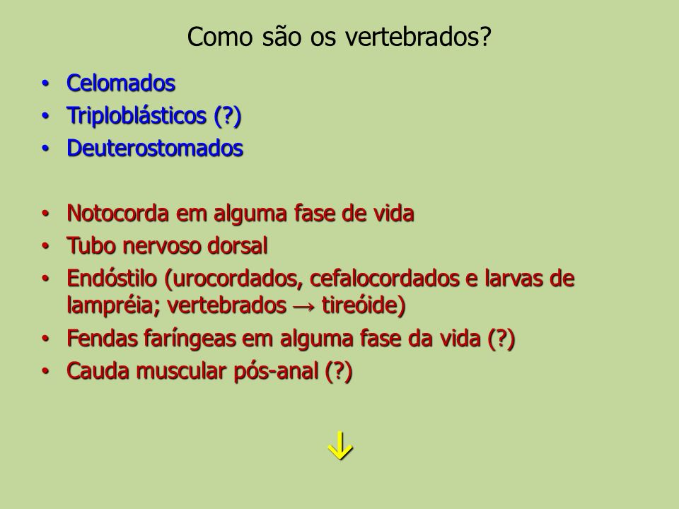 Como são os vertebrados
