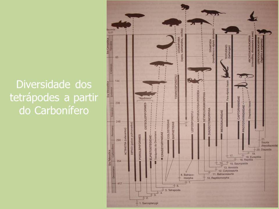 Diversidade dos tetrápodes a partir do Carbonífero