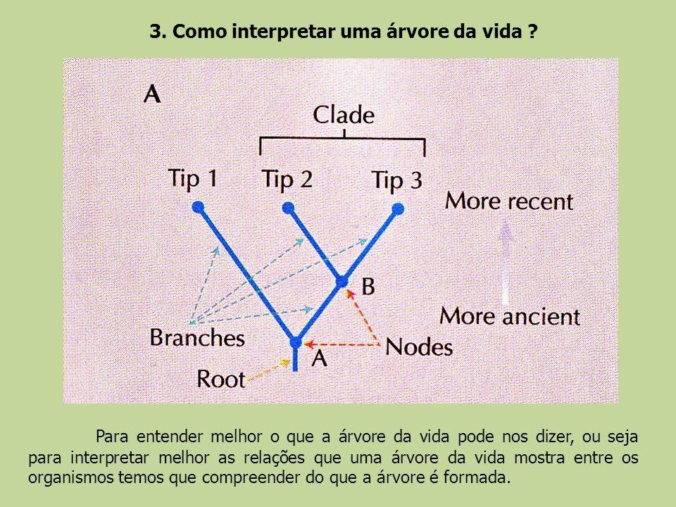 3. Como interpretar uma árvore da vida