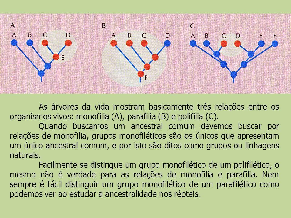 As árvores da vida mostram basicamente três relações entre os organismos vivos: monofilia (A), parafilia (B) e polifilia (C).