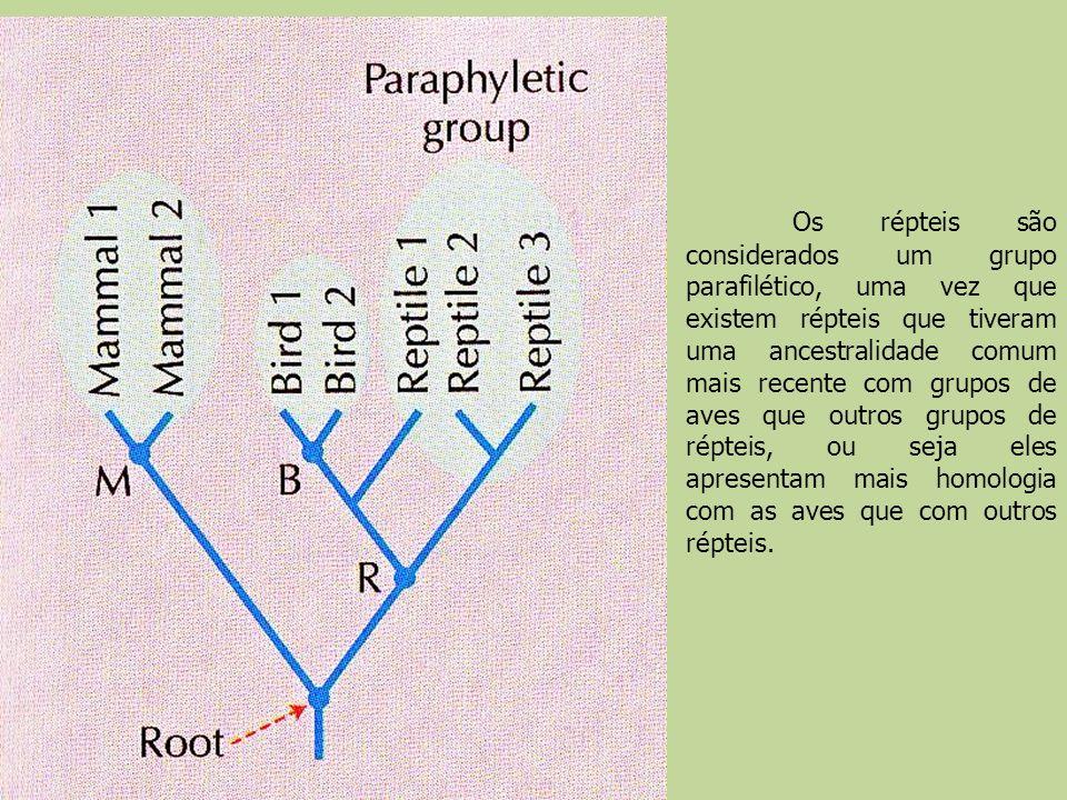 Os répteis são considerados um grupo parafilético, uma vez que existem répteis que tiveram uma ancestralidade comum mais recente com grupos de aves que outros grupos de répteis, ou seja eles apresentam mais homologia com as aves que com outros répteis.