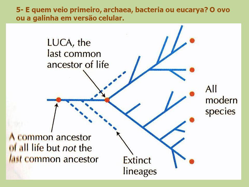 5- E quem veio primeiro, archaea, bacteria ou eucarya
